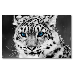 Αφίσα (χιόνι, λεοπάρδαλη, ζώο, μαύρο, λευκό, άσπρο)